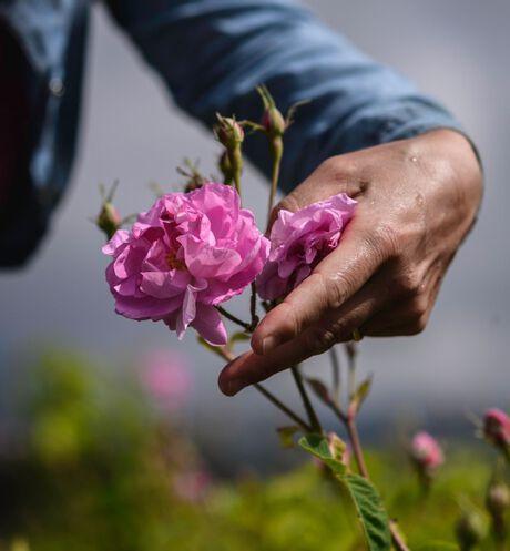 Dior - Miss Dior Absolutely Blooming Eau de parfum - 16 Ouverture de la galerie d'images