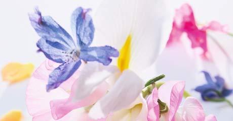 Image product Miss Dior Eau de Parfum