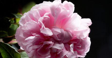 Image product Miss Dior Rose N'Roses